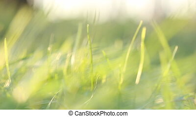 Zooming of green grass in breeze