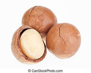 concha, unshelled, macadamia, nueces, aislado, blanco