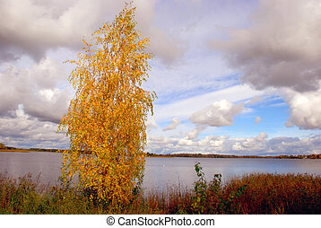 Birch gold - Autumn is sometimes the most generous with...