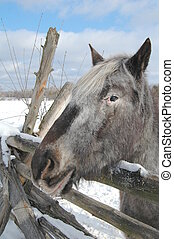 gray horse resting head on rail fence