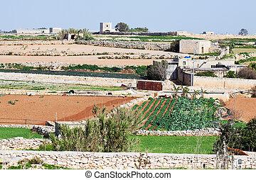 roślina, typowy, malta, Farmland