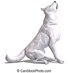 White Wolf. 3D rendering with clipping path and shadow over...