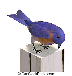 Bird Male Western Bluebird 3D rendering with clipping path...