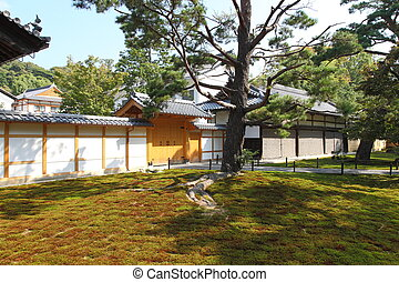 Japanese garden with old tree in sunlight