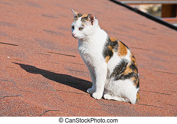 Cat on tile roof.
