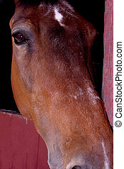 Why the Long Face - Close up of a horses head and eye as he...