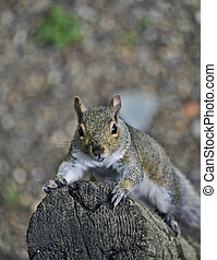 Squirrel Scrambles up Pole - Seen from above, a gray...