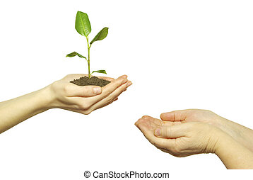 plant -  holding a plant between hands on white