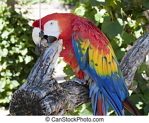 A beautiful parrot sitting on a branch and eating a nut