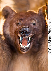 Wild Bear - Stuffed Bear show his Teeth, Focus on his Snout