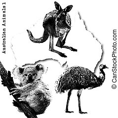 australian animals - kangaroo, koala and emu