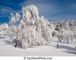 Snowy forest. - Snowy landscape with white trees.