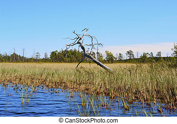 Boggy coast of lake with the inclined lonely dried up tree