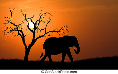 elephant silhouette - silhouette of african elephant against...