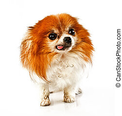 Funny looking dog with tounge out - Funny looking dirty dog...