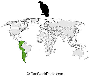andino, condor, distribuzione