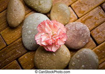 Wellness - Brown stones with water drops and flower petals