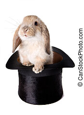 Easter surprise - Little easter lop rabbit in a magicians...