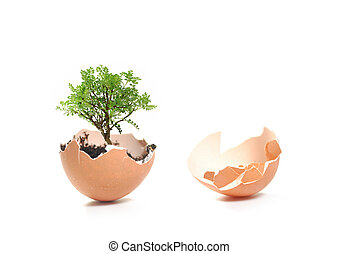 Growth concept - New tree growing from an egg