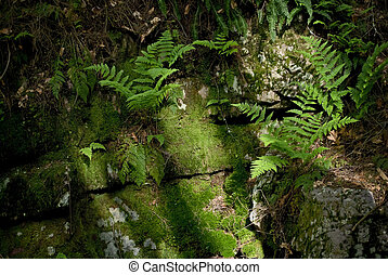 Ferns and Moss - Summer Ferns and green moss lit by sunlight...