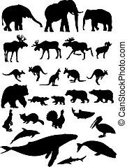 Wild animal collection - Big wild animal collection. Vector...
