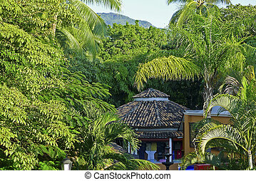 Lush city park in the tropics - Lush tropical city park in...