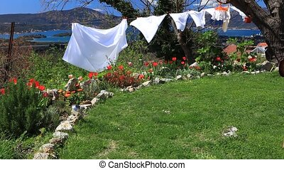 Spring washing and tulips - Bright white laundry blowing in...