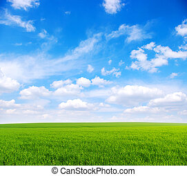 field - green grass, the blue sky and white clouds