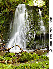 Waterfall in primeval forest, New Zealand