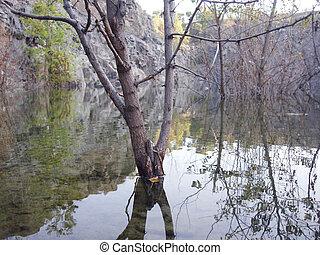 woda, drzewo