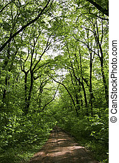 Forest Green - a country road in the forest green