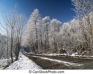The road in winter