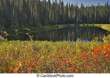 Magnificent red bushes - The silent mountain lake surrounded...