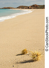 Tumbleweeds on perfect paradise beach - Landscape photo os...