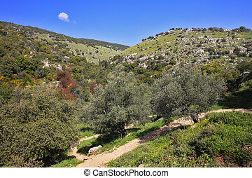 The north of Israel - Footpath among the blossoming spring...