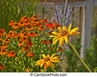 Yellow Daisy Flowers with Summer Garden Blur - This stock...