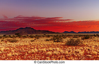 Kalahari Desert, Namibia - Colorful sunset in Kalahari...
