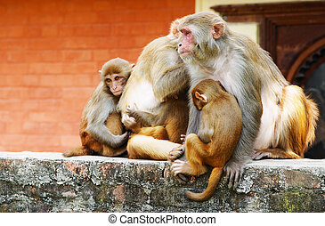 Monkey's family in hindu temple, Nepal
