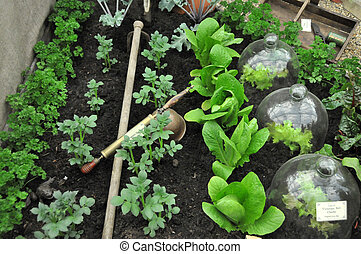 victorian vegetable garden with bell cloches and seringe