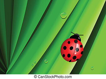 Lady Bug - Illustration of a bug on leaves