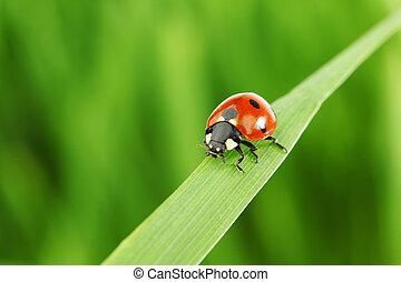 ladybug on grass nature background