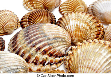 seashells - closeup of a pile of seashells isolated on a...