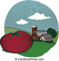 Tomato Scene Color