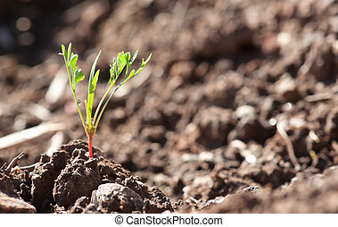 little young plant sprout