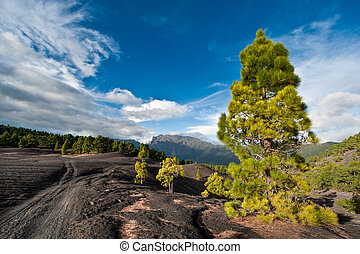Dirt road through the beautiful lava landscape on the Cumbre...
