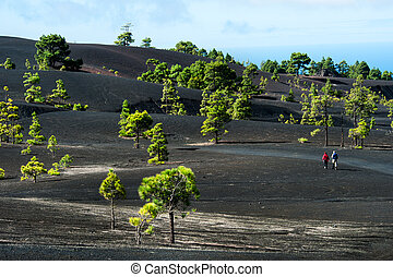 Beautiful lava landscape on the Cumbre Nueva in La Palma,...