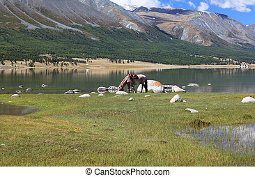 Horse eat grass at mountain lake - Khoton Nuur lake Khoton...