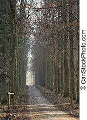 ensoleillé, hiver, ruelle, forêt