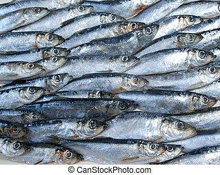 fresco, arenque, pescado