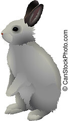 Rabbit - Gray rabbit with brown ears, stands on a white...